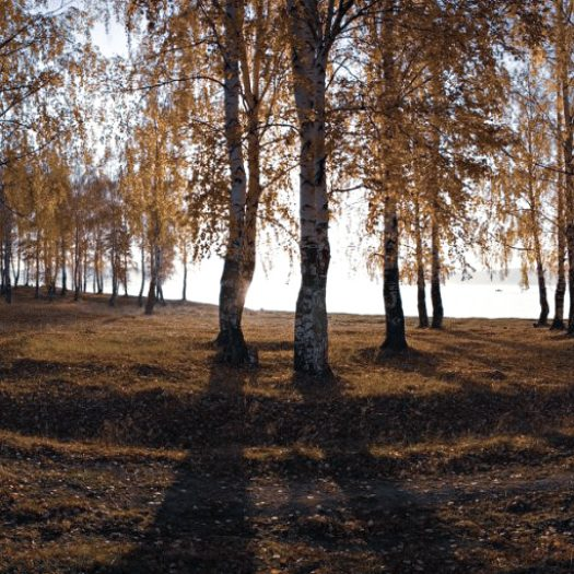 1 Story Why You Should Visit That Small Ural Village